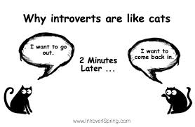 Meme Why - the problem only an introvert personality will understand hint
