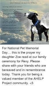 pet prayer dog s prayer for grieving humans and if i go while you are still