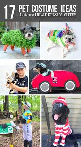 horse jockey halloween costume 17 diy pet costume ideas that are hilariously cute