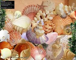 assorted seashells 147 best seashells images on sea shells sea glass and