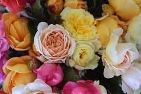 roses wholesale cut roses wholesale story farm