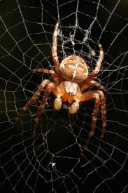 184 best spiders arachnids images on pinterest spiders insects