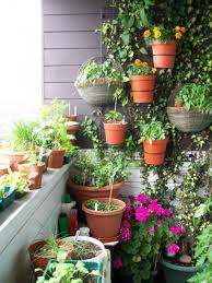 balcony garden with hanging potted and climbing plants a balcony