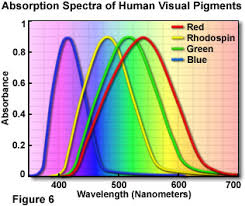 Incidence Of Color Blindness Molecular Expressions Microscopy Primer Physics Of Light And