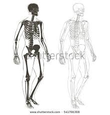 Anatomy Of Human Body Sketches Human Body Parts Stock Images Royalty Free Images U0026 Vectors