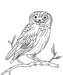owl free coloring pages owl alphabet coloring pages perched