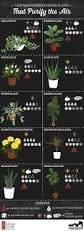 Indoor Tropical Plants For Sale - best 25 house plants ideas on pinterest plants indoor