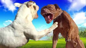 american pitbull a terrier american bulldog vs american pitbull terrier ultimate clash