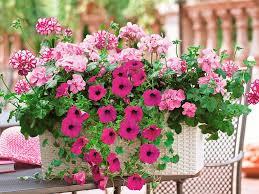 krã uter balkon wohnzimmerz balkon und kübelpflanzen with balkon wie im urlaub