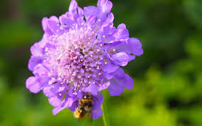 plants native to arkansas pollinator plants for arkansas gardens the good earth garden center