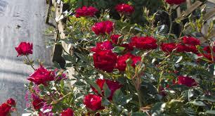 Family Garden Center Perennials Trees U0026 Shrubs U2013 Homestead Garden Center U2013 757 566