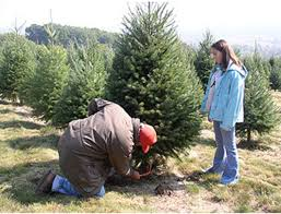 find your 2014 christmas tree at one of these 10 central pa places