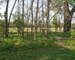 plants native to indiana river road habitat restoration carmel green teen micro grant program