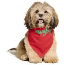 Lubbock Craigslist Free Stuff by Petsmart Facebook