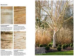 best birch for your garden gardens illustrated