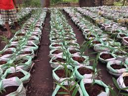 fall natural fertilizer for vegetable garden dr earth lb home