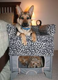 Bunk Bed For Dogs Pets Keeping You From A Good Night U0027s Sleep Pet Bunk Beds May Help