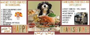 thanksgiving food dogs and what not to feed your pets cats can eat