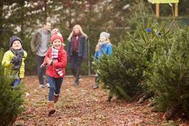 the ultimate tree buying care guide the krazy coupon