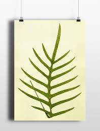 Fern Decor by Antique Fern Print 1800s Fern Art Print Vintage Antique