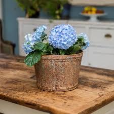 large aged zinc planter plant pot by stupid egg interiors