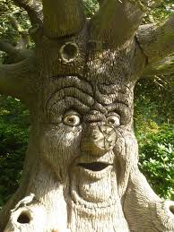 tree face free images old monument statue jungle botany sculpture