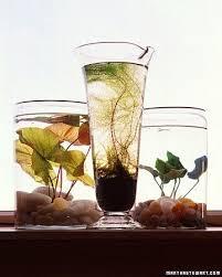 Indoor Container Gardening - 15 best indoor container water gardens images on pinterest