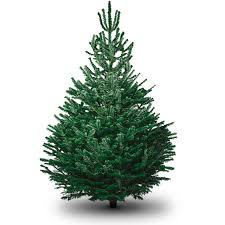 7ft christmas tree 7ft nordman fir christmas tree delivered