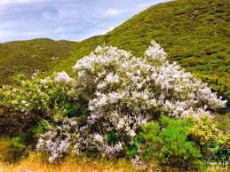 los angeles native plants wildflowers in angeles national forest travel to eat