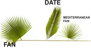 palms for palm sunday palms palm sunday