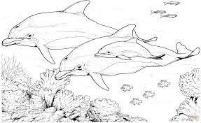 bottlenose dolphins coloring page free printable coloring pages