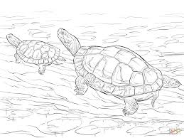 coloring page turtle two painted turtles coloring page free printable coloring pages