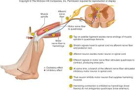 Pain Reflex Pathway Think Tank Centre August 2015