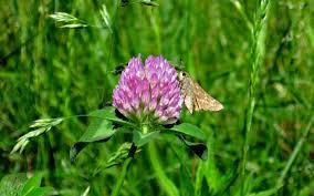 file a butterfly on a flower jpg wikimedia commons