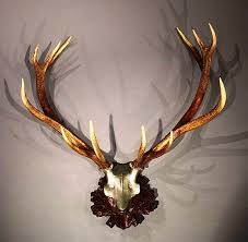 Whitetail Deer Home Decor by Decorative Antlers For Walls U2014 Jen U0026 Joes Design