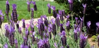 Gardening Zone By Zip Code - hardiness and heat tolerance understanding planting zones