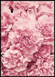 where to buy peonies peonies poster