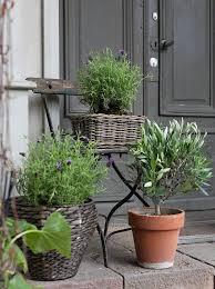 Plant Delivery Best 25 Wholesale Plants Ideas On Pinterest Wedding Succulent