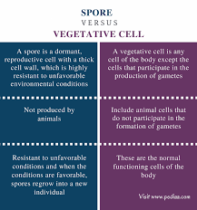 Which Is A Reproductive Cell Difference Between Spore And Vegetative Cell Definition Types