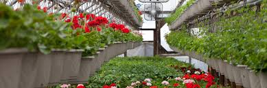 florist ta greenhouse florist and nursery tests soil testing laboratory