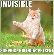 Invisible Cat Memes - invisible cat images on favim com