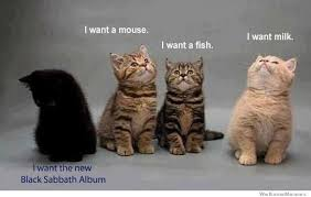 Black Sabbath Memes - what black cats really think about weknowmemes
