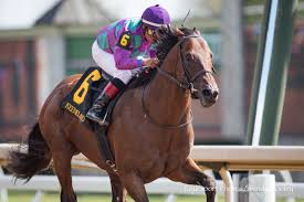 ami u0027s flatter finishes strong in commonwealth horse racing news
