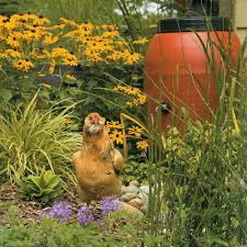 How To Create A Beautiful Backyard 33 Best Chicken Garden Images On Pinterest Chicken Garden