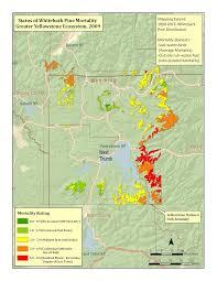 Yellowstone Park Map Yellowstone National Park Gywpc Whitebark Pine Distribution