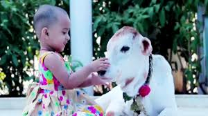 most popular amazing video baby with cow most funny video youtube