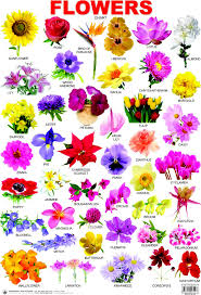 list of spring flowers in india u2013 thin blog