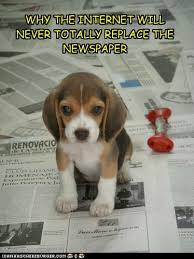 Newspaper Cat Meme - i can has cheezburger pee pads funny internet cats cat memes