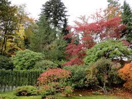 Botanical Gardens Seattle Danger Garden The Seattle Japanese Garden