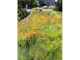 family garden brooklyn greenroofs com projects brooklyn botanic garden visitor center